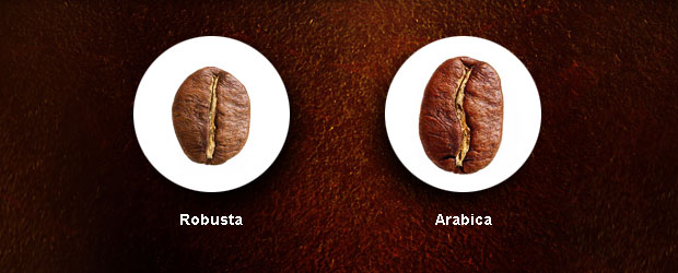 Robusta versus Arabica